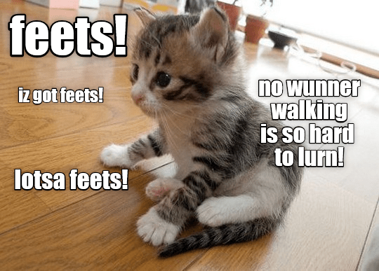 cat meme - Cat - feets! no wunner walking is so hard to lurn! Izgot feets! lotsa feets!