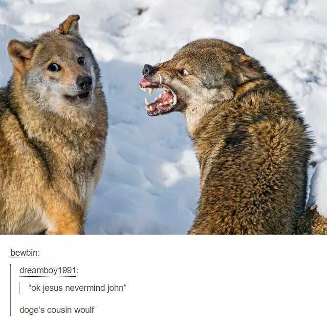 "Vertebrate - bewbin: dreamboy1991: ""ok jesus nevermind john"" doge's cousin woulf"
