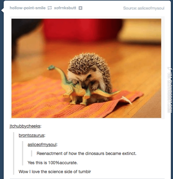 Hedgehog - hollow-point-smile xofrnksbutt Source: asliceofmysoul itchubbycheeks brontozaurus asliceofmysoul: Reenactment of how the dinosaurs became extinct. Yes this is 100%accurate. Wow I love the science side of tumblr orowRAPeTAOM MIASHUWIRUDULUUM
