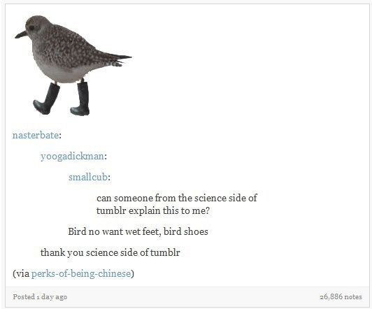 Bird - nasterbate: yoogadickman: smallcub: can someone from the science side of tumblr explain this to me? Bird no want wet feet, bird shoes thank you science side of tumblr (via perks-of-being-chinese) Posted i day ago 26,886 notes