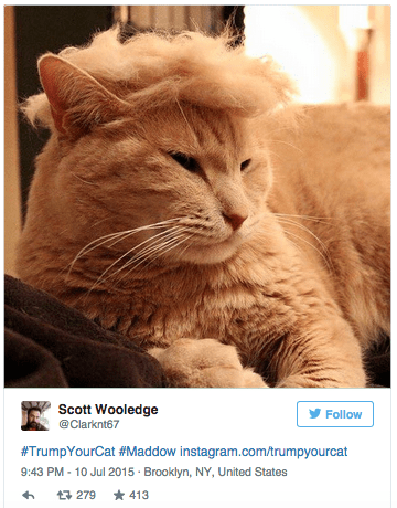 Tweet meme of a cat that had Donald Trump's hair and look