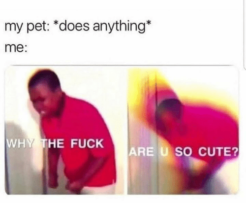 Meme of someone freaking out when their pet does anything cute