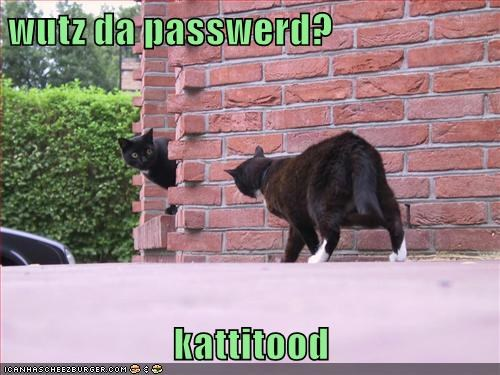 Wutz da passwerd? kattitood