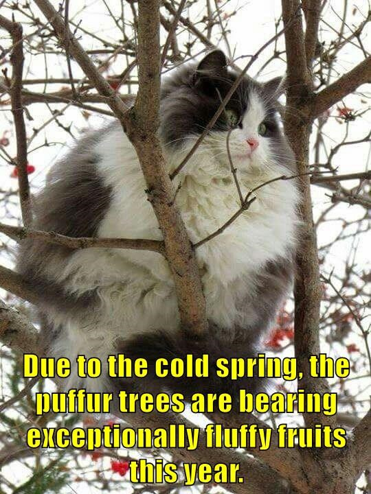 Due to the cold spring