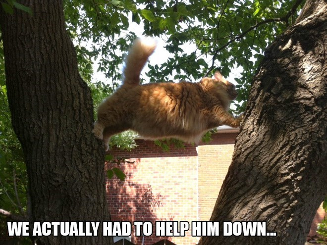 Cat - WE ACTUALLY HAD TO HELP HIM DOWN..
