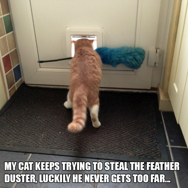 Cat - MY CAT KEEPS TRYING TO STEAL THE FEATHER DUSTER, LUCKILY HE NEVER GETS TOO FAR...