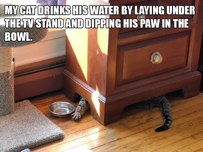 Hardwood - MY CAT DRINKS HIS WATER BY LAYING UNDER THETV STAND AND DIPPING HIS PAW IN THE BOWL