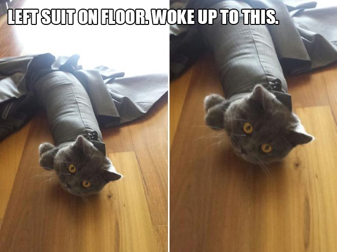 Cat - LEFT SUIT ON FLOOR, WOKE UP TO THIS.