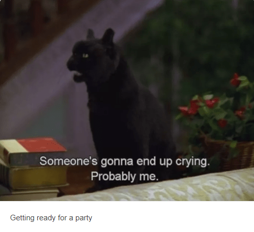 salem cat Someone's gonna end up crying Probably me Getting ready for a party