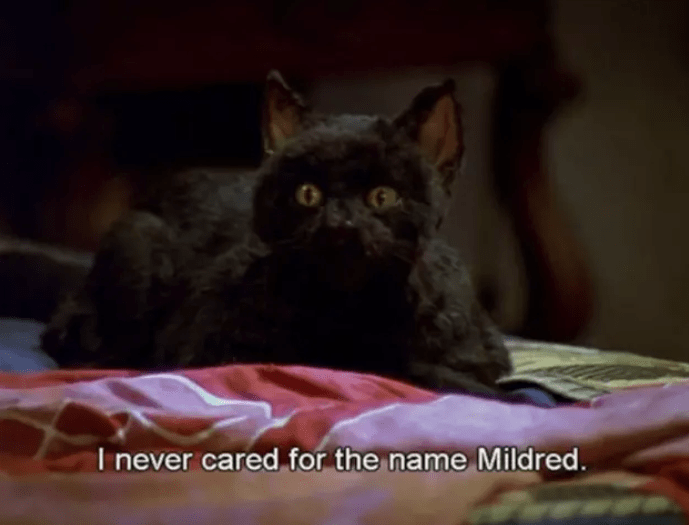 salem Cat - I never cared for the name Mildred.
