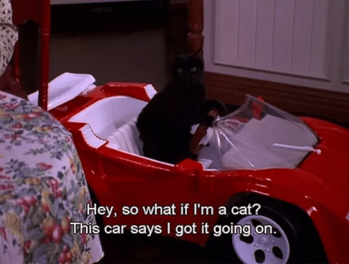 salem cat inside small red car this car says i got it going on