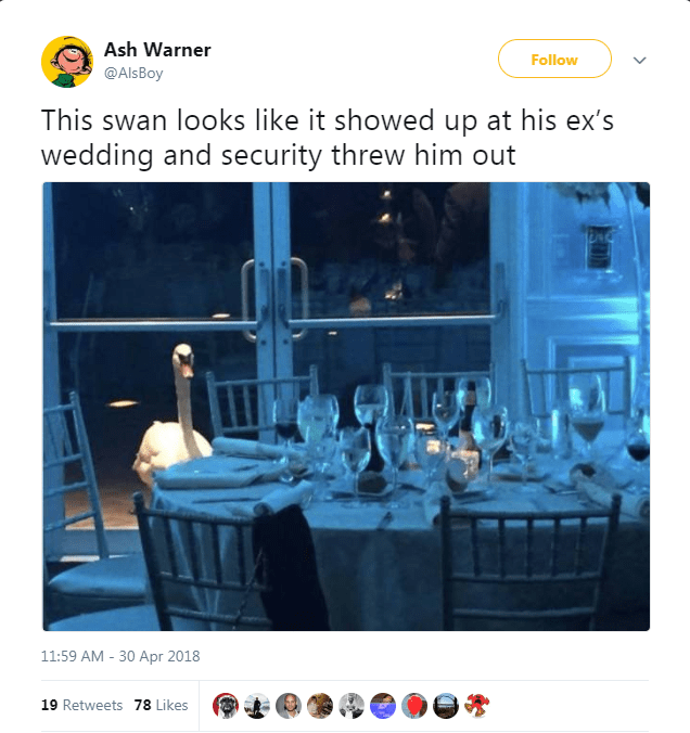 Ash Warner Follow @Als Boy This swan looks like it showed up at his ex's wedding and security threw him out 11:59 AM -30 Apr 2018 19 Retweets 78 Likes