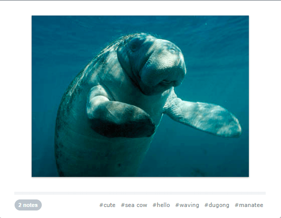 cute waving animals - Manatee - #hello #waving #dugong #manatee 2 notes #cute # sea cow