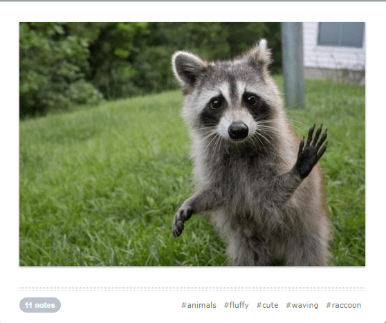 cute waving animals - Mammal - #animals #fluffy #cute #waving #raccoon 11 notes