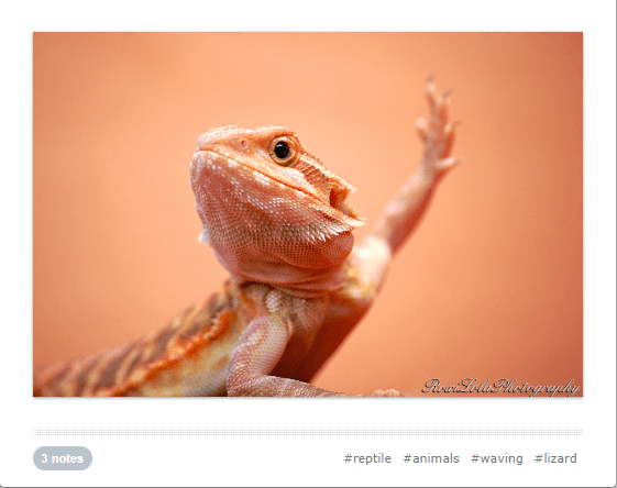 cute waving animals - Reptile - Rowi Lola Plotograly #reptile #animals #waving #lizard 3 notes