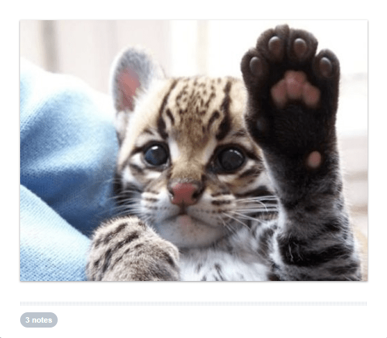 cute waving animals - Mammal - 3 notes