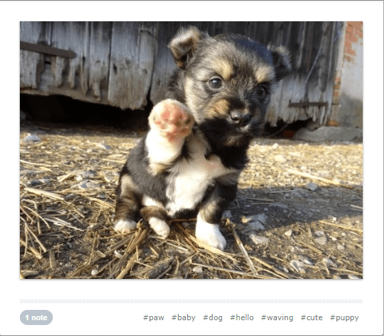 cute waving animals - Mammal - #paw #baby #dog #hello #waving #cute #puppy 1 note