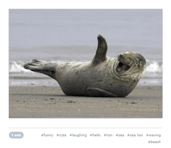 cute waving animals - Seal - #sea lion #waving #funny #cute #laughing #hello #lion 1 note #sea #beach