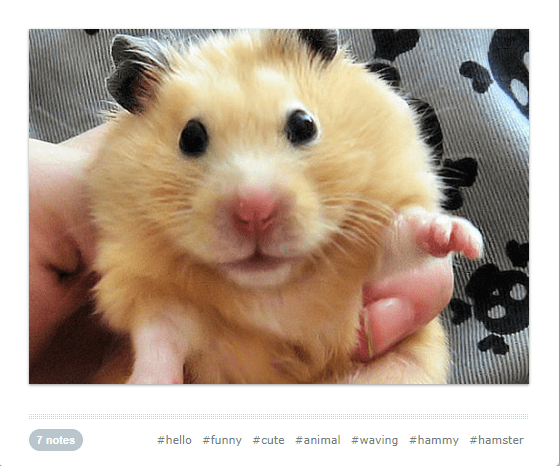 cute waving animals - Vertebrate - 7 notes #hello #funny #cute #animal #waving #hammy #hamster