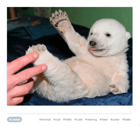 cute waving animals - Mammal - #animal #cub #hello #cute #waving #bear #polar #baby 15 notes