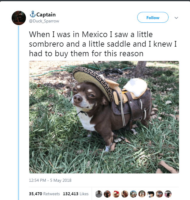 Canidae - Captain Follow @Duck_Sparrow When I was in Mexico I saw a little sombrero and a little saddle and I knew I had to buy them for this reason 12:54 PM - 5 May 2018 35,470 Retweets 132,413 Likes