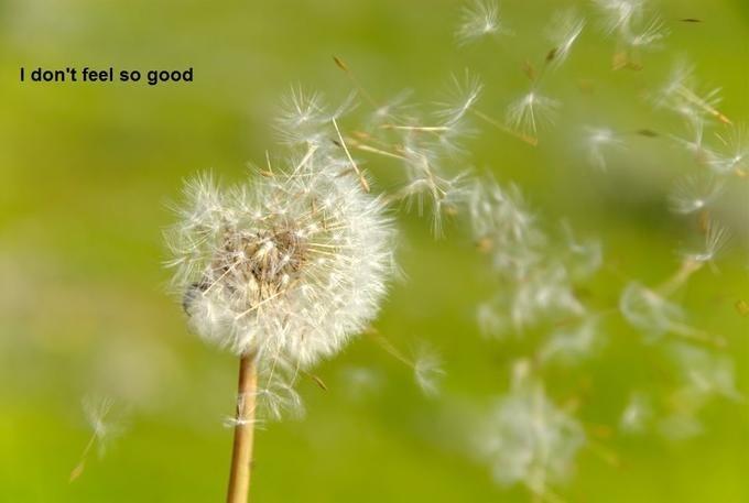 dandelion - I don't feel so good
