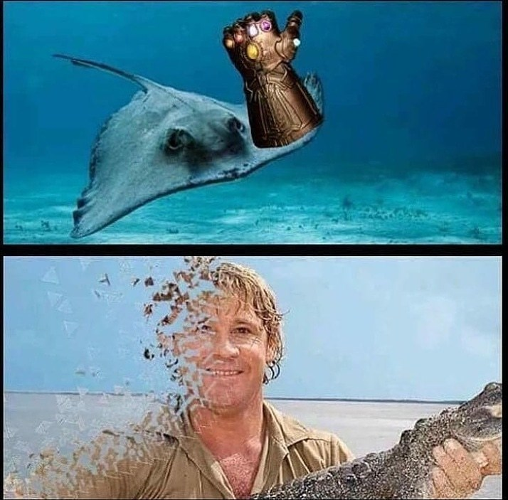 Funny meme about steve irwin, disintegration meme, the avengers, marvel.