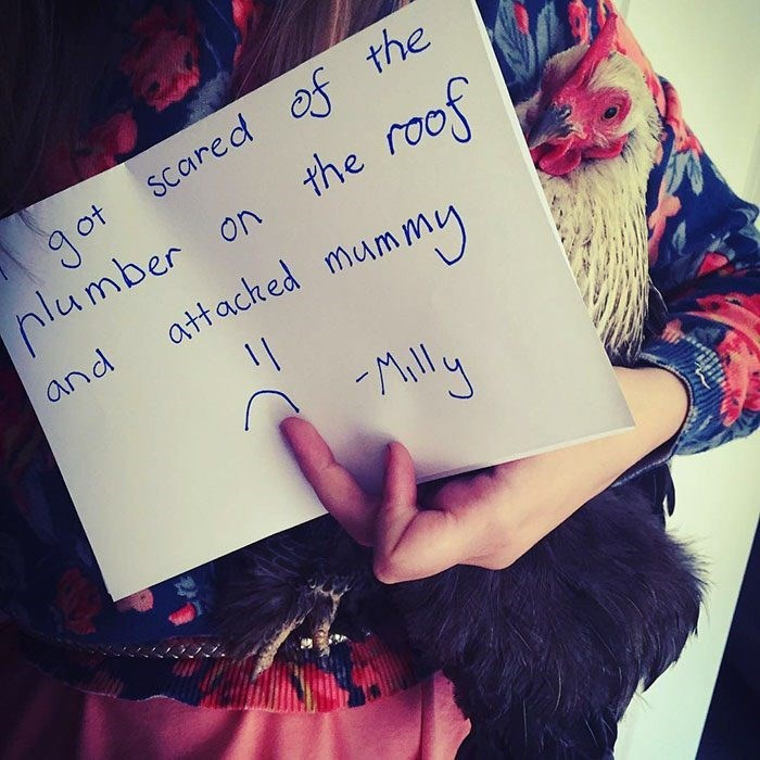 Text - got Scared of the nlumber on the roof attacted mummy and Mly