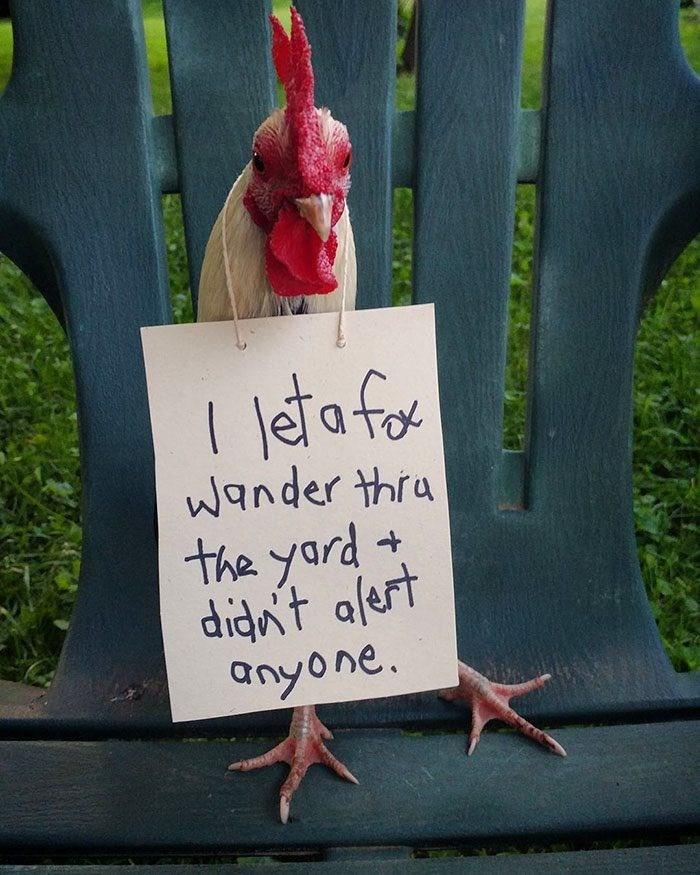 Leaf - ltafo Wander thru the yard didnt alert anyone. +