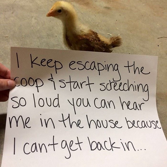 Text - keep escaping the SOopistart soching So loud you can rear Ime in the house becaus cantaet loack in...