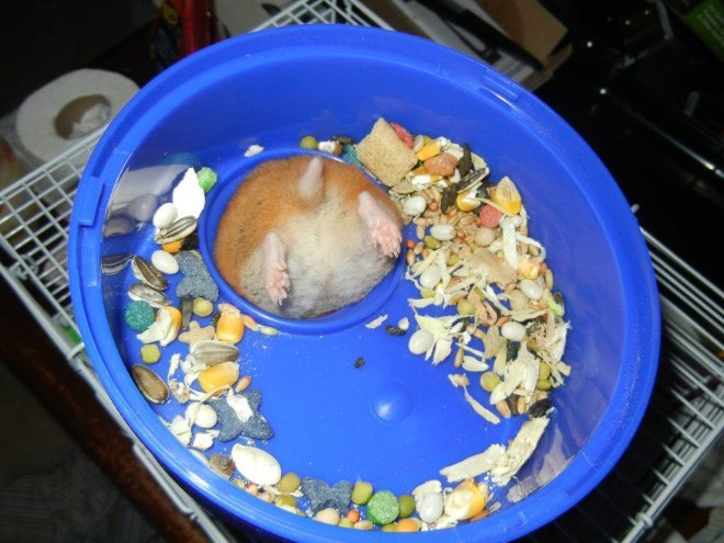 hamster butt - Dish