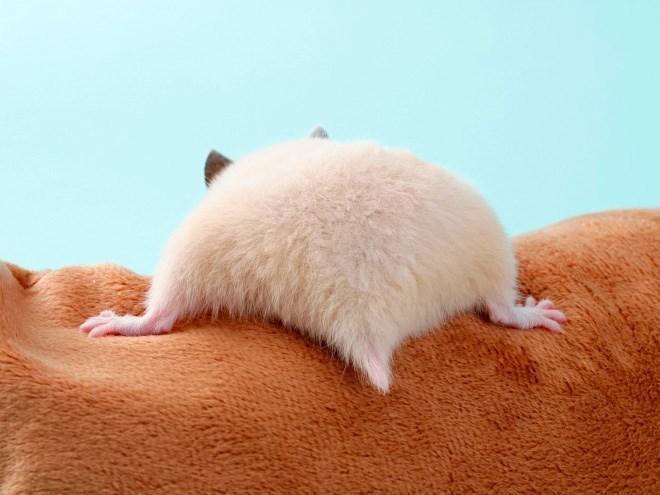 hamster butt - Skin