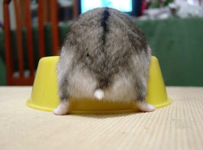 hamster butt - Yellow