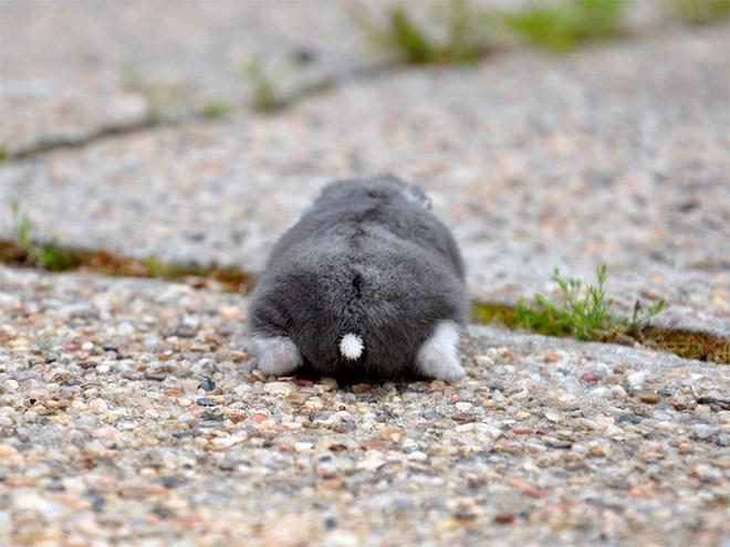 hamster butt - Snout