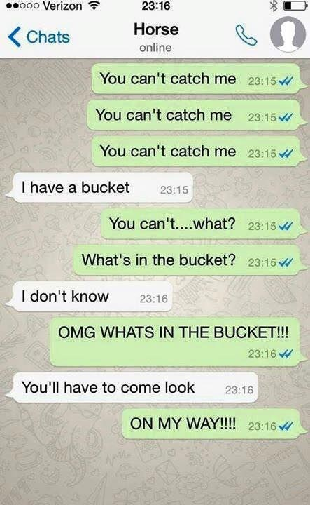 horse chat - Text - 23:16 o0o Verizon Horse Chats online You can't catch me 23:15 You can't catch me 23:15 You can't catch me 23:15v I have a bucket 23:15 You can't....what? 23:15 What's in the bucket? 23:15 I don't know 23:16 OMG WHATS IN THE BUCKET!! 23:16 You'll have to come look 23:16 ON MY WAY!!!! 23:16 20