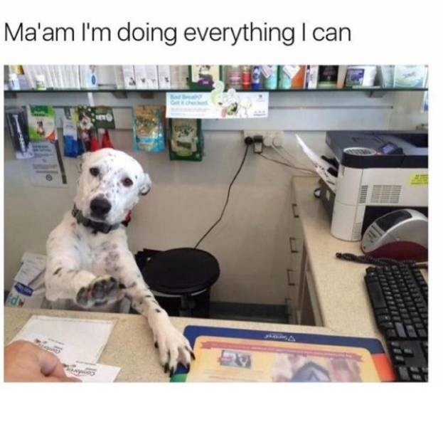 work meme dog with its paw up sitting behind a desk