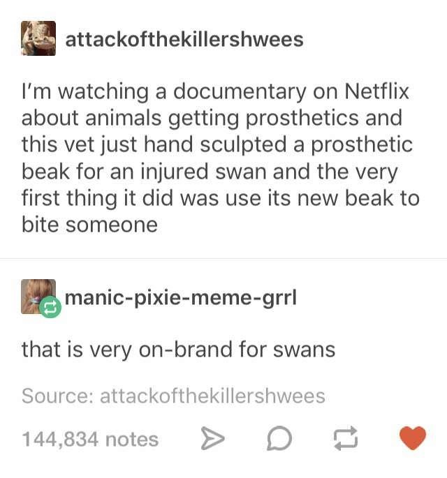 Text - attackofthekillershwees I'm watching a documentary on Netflix about animals getting prosthetics and this vet just hand sculpted a prosthetic beak for an injured swan and the very first thing it did was use its new beak to bite someone manic-pixie-meme-grrl that is very on-brand for swa Source: attackofthekillershwees 144,834 notes