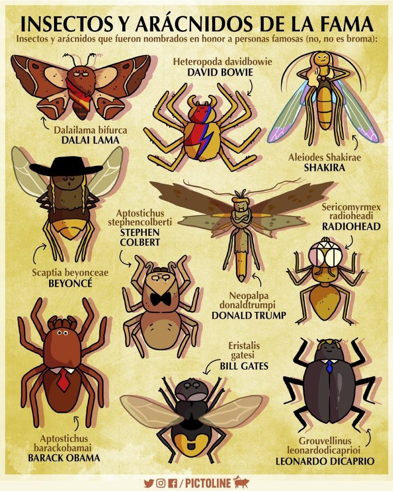 galeria con insectos inspirados en famosos