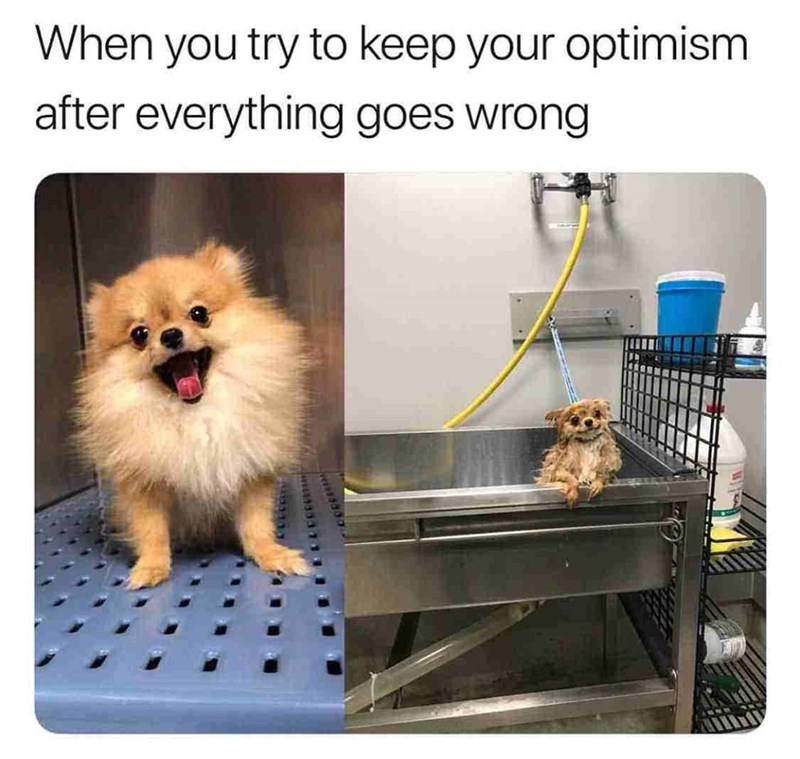 meme - Dog - When you try to keep your optimism after everything goes wrong