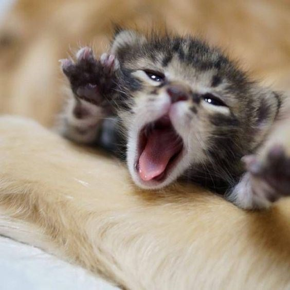 kittens - Cat