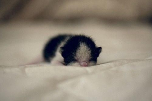 kittens - Puppy
