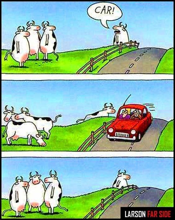 cow webcomics - Cartoon - CAR! LARSON FAR SIDE