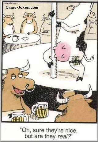 "cow webcomics - Cartoon - Crazy-Jokes.com ""Oh, sure they're nice, but are they real?"