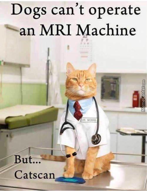 Cat - Dogs can't operate an MRI Machine DR MORRS But... Catscan MemeCenter.com