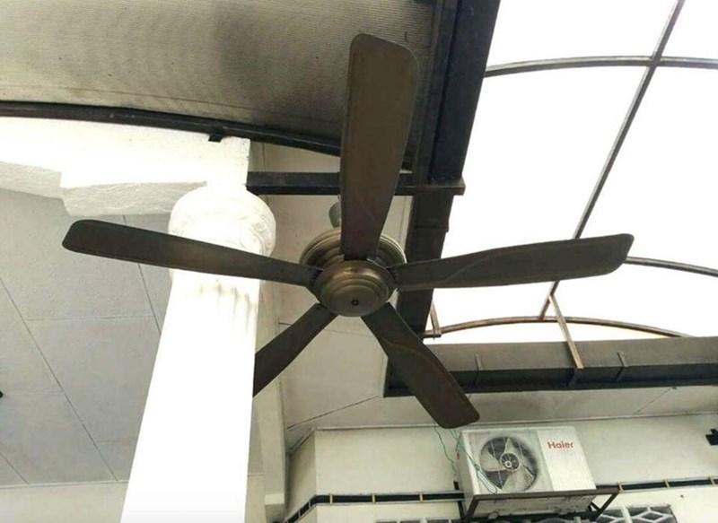 Ceiling fan - Haler