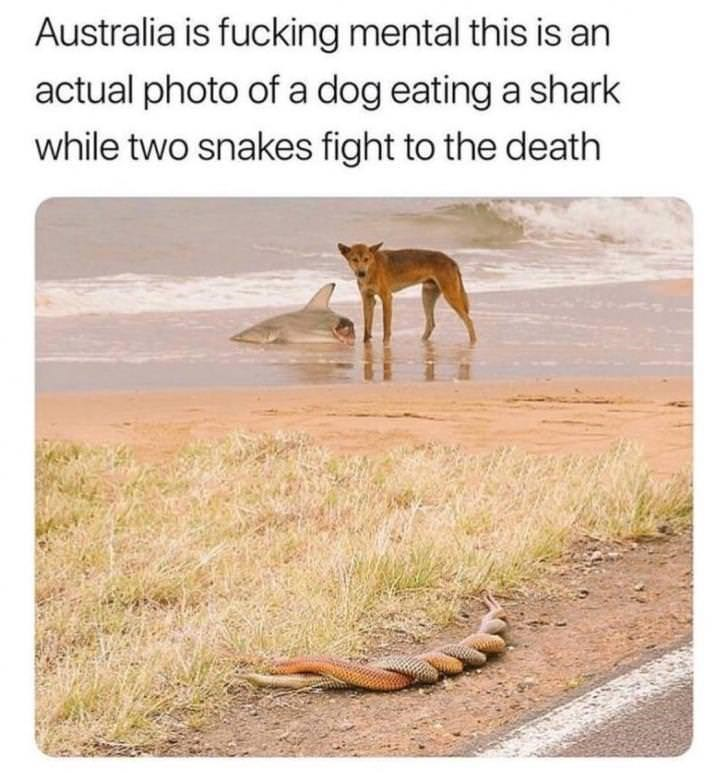 Wildlife - Australia is fucking mental this is an actual photo of a dog eating a shark while two snakes fight to the death