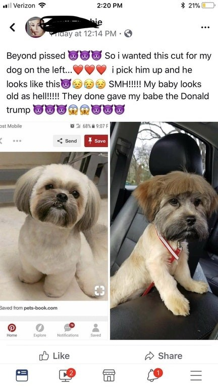 Dog - l Verizon 21% 2:20 PM ie day at 12:14 PM So i wanted this cut for my Beyond pissed dog on the left... i pick him up and he looks like this SMH!!!!! My baby looks old as hell!!! They done gave my babe the Donald trump ost Mobile 68%9:07F Send Save Saved from pets-book.com Home Explore Notifications Saved Like Share C2