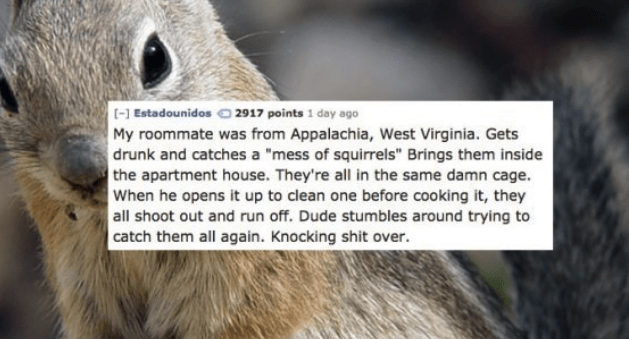 """Adaptation - - Estadounidos 2917 points 1 day ago My roommate was from Appalachia, West Virginia. Gets drunk and catches a """"mess of squirrels"""" Brings them inside the apartment house. They're all in the same damn cage. When he opens it up to clean one before cooking it, they all shoot out and run off. Dude stumbles around trying to catch them all again. Knocking shit over."""