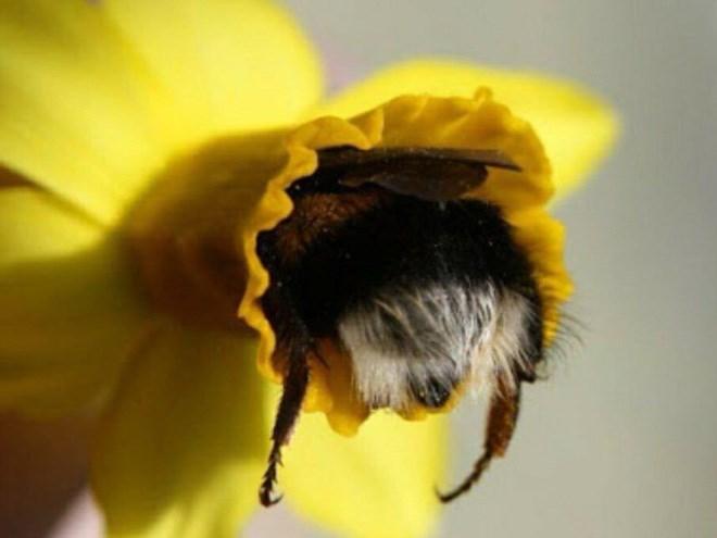cute bee - Yellow