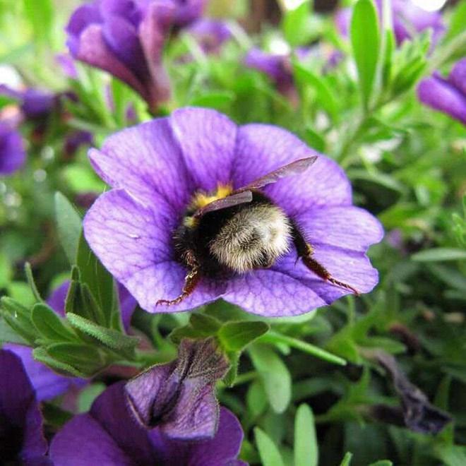 cute bee - Flower